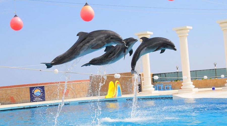 Delfíní show z Alanye