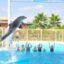 Delfinárium z Alanye