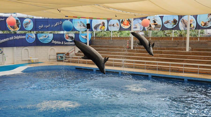 Delfinárium z Antalye