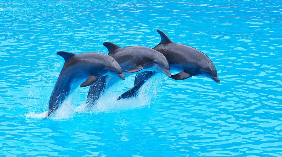 Delfíní show z Beleku