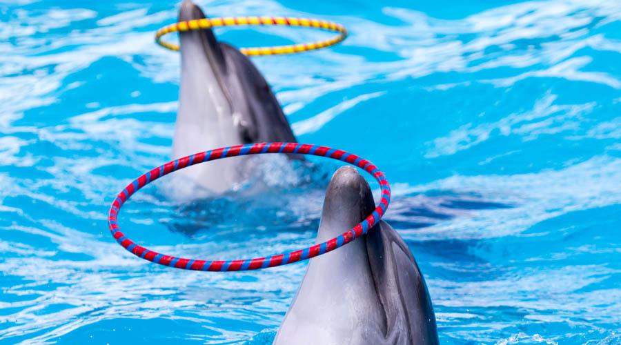 Delfinárium z Beleku