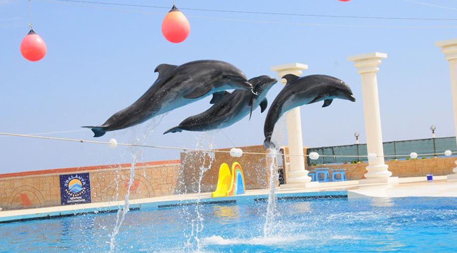 Delfíní show ze Side