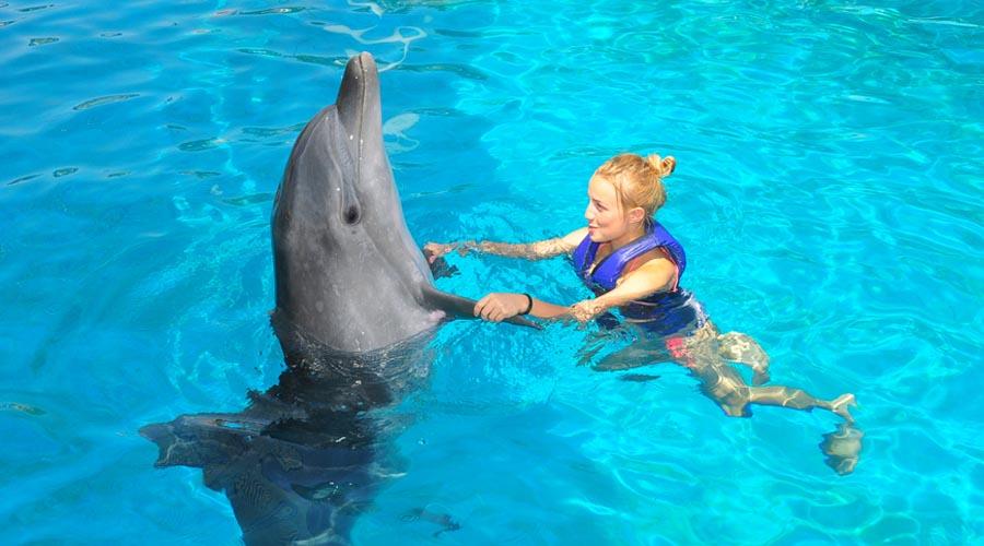 Delfinárium ze Side